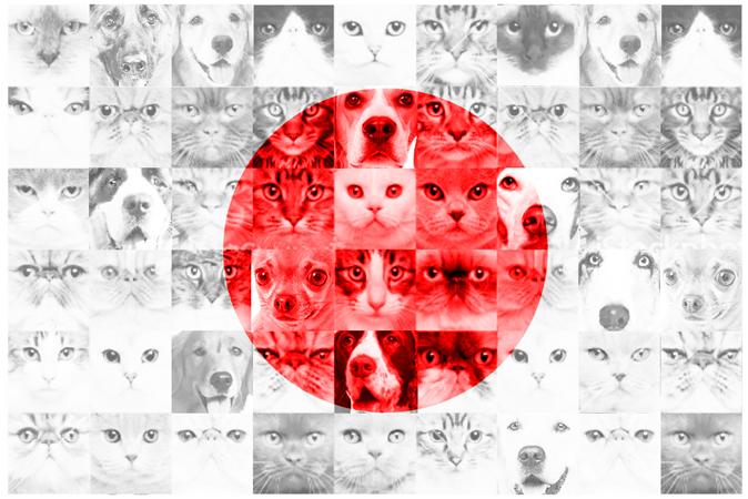 Mascotas de alquiler en Japón