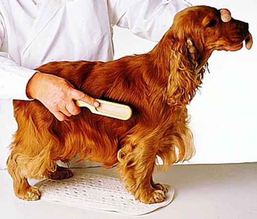 C mo ba ar a tu perro funkypet magazine - Como banar a un perro ...
