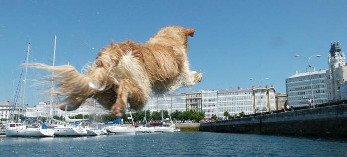 Concurso fotográfico de Noël et Chloé «Mi Perro en A Coruña»