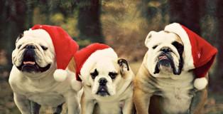 Pets-love-Christmas-too-christmas-32853344-500-333