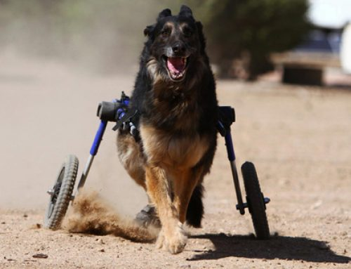 Nace la primera ortopedia para mascotas en España