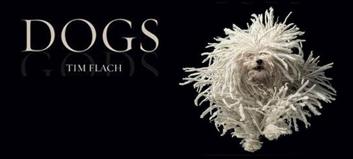 """Tim Flach y su libro """"DOGS"""": un pellizco en el alma"""