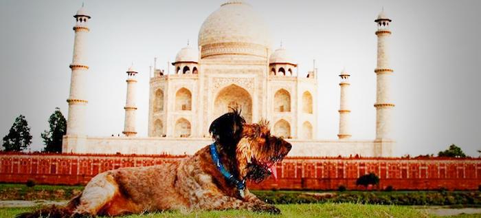 La vuelta al mundo con Oscar, el perro viajero