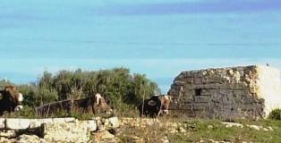Camp de Menorca