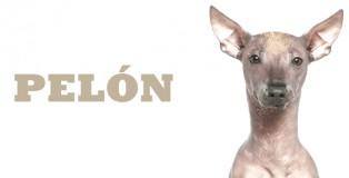 PELON1