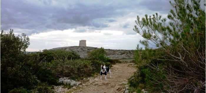 PateaMenorca Alcalfar Punta Prima
