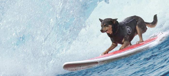 California dream: perros y surf