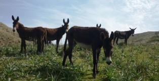 4. Manada de burros salvajes