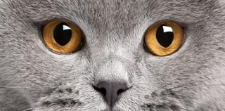 Las vibrisas, los bigotes desconocidos de los gatos