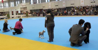 Final del Concurso de Mascotas.fto Henar Sastre