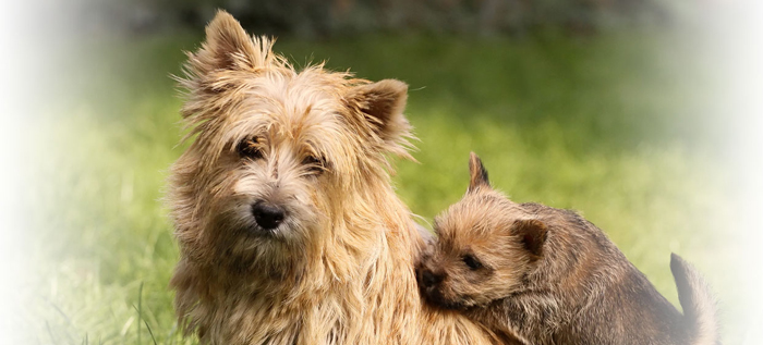 Masquecotas, la red social para mascotas