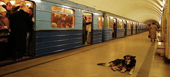 Los perros callejeros de Moscú
