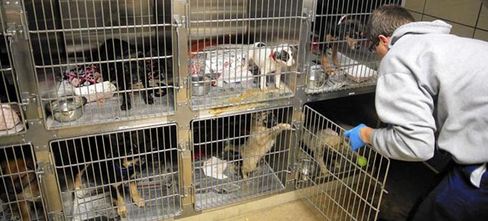 Prohíben la venta de cachorros en Chicago, para fomentar la adopción