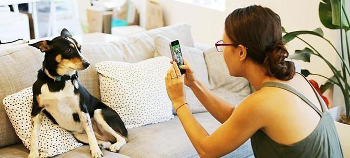BarkCam, una «app» especial para fotografiar a las mascotas