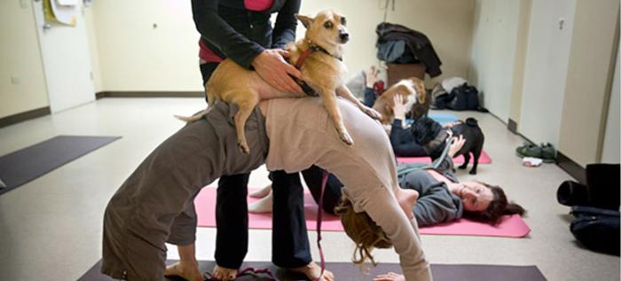 El Doga: El Yoga de los perros