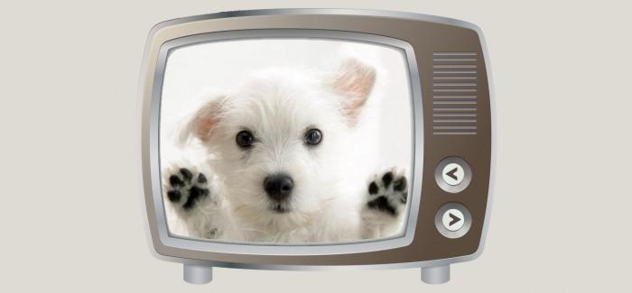 Marketing directo para mascotas